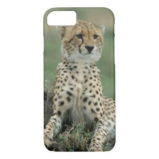Africa, Kenya, Cheetahs iPhone 7 Case