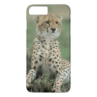 Africa, Kenya, Cheetahs iPhone 7 Plus Case