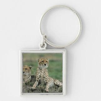 Africa, Kenya, Cheetahs Key Ring