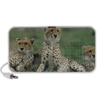 Africa, Kenya, Cheetahs Laptop Speaker
