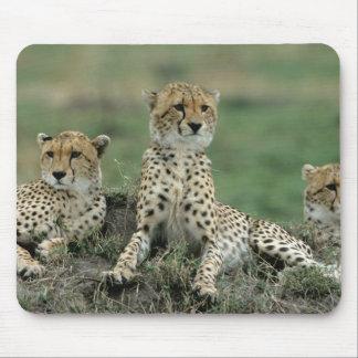 Africa, Kenya, Cheetahs Mouse Mat