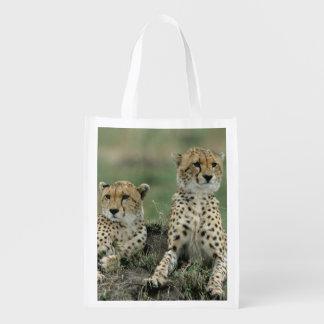 Africa, Kenya, Cheetahs Reusable Grocery Bag