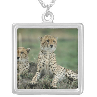 Africa, Kenya, Cheetahs Silver Plated Necklace