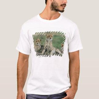 Africa, Kenya, Cheetahs T-Shirt