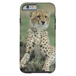 Africa, Kenya, Cheetahs Tough iPhone 6 Case