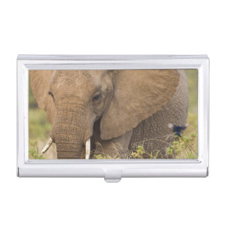 Africa. Kenya. Elephant at Samburu NP. Business Card Holder