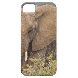 Africa. Kenya. Elephant at Samburu NP. Case For The iPhone 5
