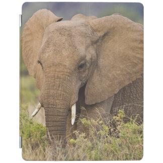 Africa. Kenya. Elephant at Samburu NP. iPad Cover