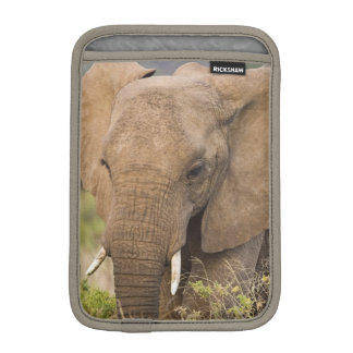 Africa. Kenya. Elephant at Samburu NP. iPad Mini Sleeve