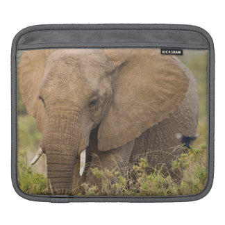 Africa. Kenya. Elephant at Samburu NP. iPad Sleeve