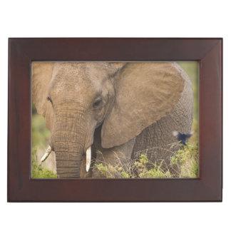 Africa. Kenya. Elephant at Samburu NP. Keepsake Box