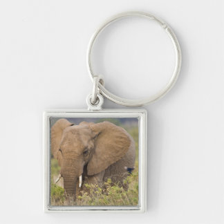 Africa. Kenya. Elephant at Samburu NP. Key Ring