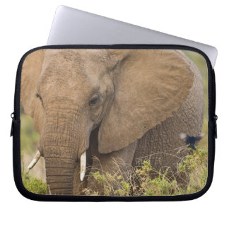 Africa. Kenya. Elephant at Samburu NP. Laptop Sleeve