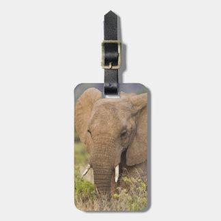 Africa. Kenya. Elephant at Samburu NP. Luggage Tag