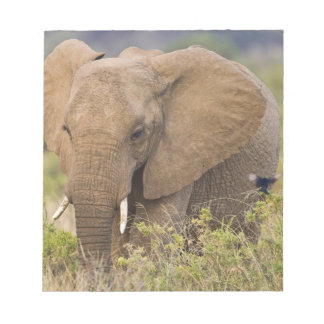 Africa. Kenya. Elephant at Samburu NP. Notepad