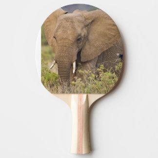 Africa. Kenya. Elephant at Samburu NP. Ping Pong Paddle
