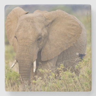 Africa. Kenya. Elephant at Samburu NP. Stone Coaster