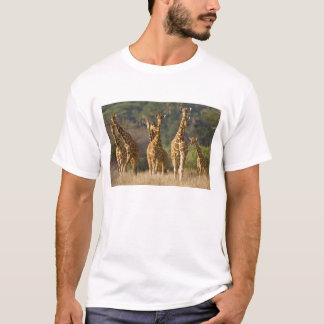 Africa. Kenya. Herd of Reticulated Giraffes at T-Shirt