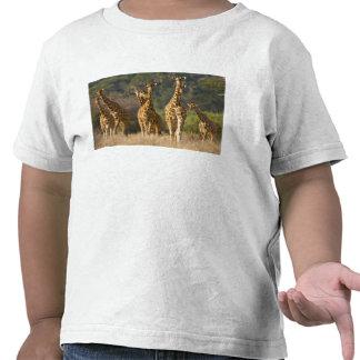 Africa Kenya Herd of Reticulated Giraffes at Tee Shirt