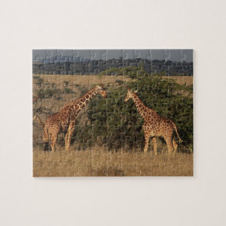 Africa, Kenya, Lewa Downs, Two reticulated Jigsaw Puzzle