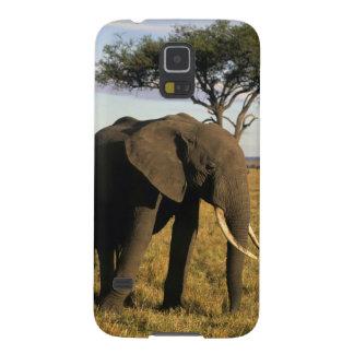Africa, Kenya, Maasai Mara. An elehpant in the Case For Galaxy S5