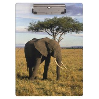 Africa, Kenya, Maasai Mara. An elehpant in the Clipboard