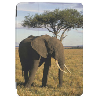 Africa, Kenya, Maasai Mara. An elehpant in the iPad Air Cover