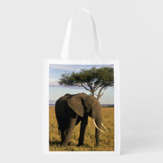 Africa, Kenya, Maasai Mara. An elehpant in the Reusable Grocery Bag