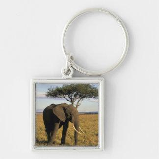 Africa, Kenya, Maasai Mara. An elehpant in the Silver-Colored Square Key Ring