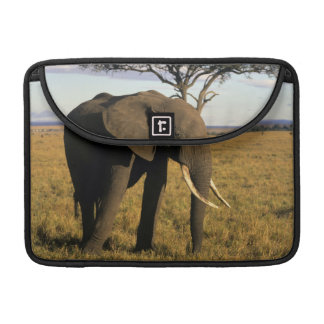 Africa, Kenya, Maasai Mara. An elehpant in the Sleeve For MacBooks