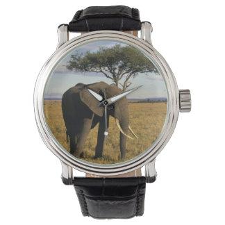 Africa, Kenya, Maasai Mara. An elehpant in the Watch