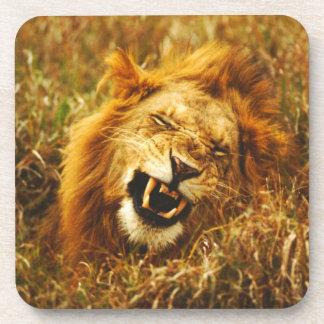 Africa, Kenya, Maasai Mara. Male lion. Wild Beverage Coasters