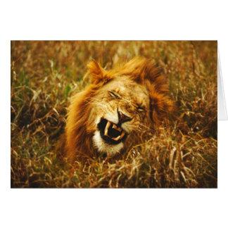 Africa, Kenya, Maasai Mara. Male lion. Wild Card