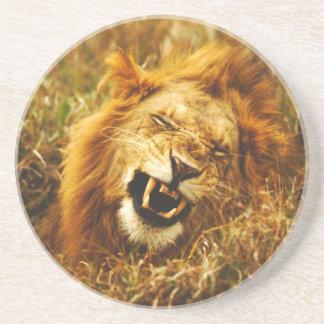 Africa, Kenya, Maasai Mara. Male lion. Wild Coaster