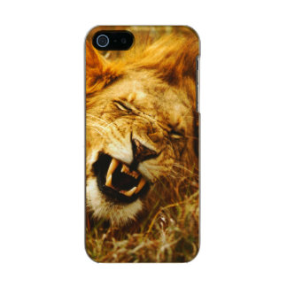 Africa, Kenya, Maasai Mara. Male lion. Wild Incipio Feather® Shine iPhone 5 Case