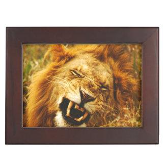 Africa, Kenya, Maasai Mara. Male lion. Wild Keepsake Boxes