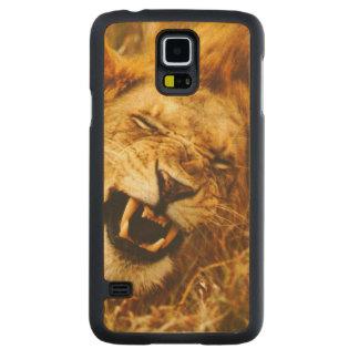 Africa, Kenya, Maasai Mara. Male lion. Wild Maple Galaxy S5 Slim Case