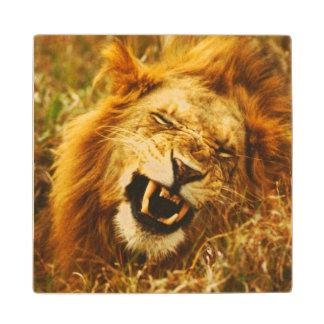 Africa, Kenya, Maasai Mara. Male lion. Wild Maple Wood Coaster