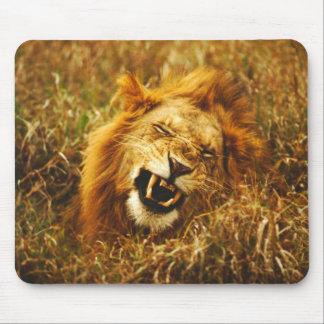 Africa, Kenya, Maasai Mara. Male lion. Wild Mouse Mat