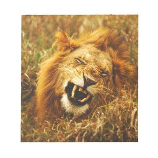 Africa, Kenya, Maasai Mara. Male lion. Wild Notepad
