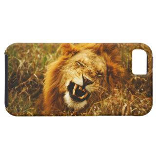 Africa, Kenya, Maasai Mara. Male lion. Wild Tough iPhone 5 Case