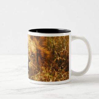 Africa, Kenya, Maasai Mara. Male lion. Wild Two-Tone Coffee Mug