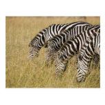 Africa, Kenya, Maasai Mara Postcard