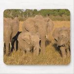 Africa, Kenya, Masai Mara. African Elephant Mouse Mats