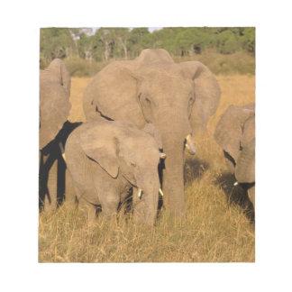 Africa, Kenya, Masai Mara. African Elephant Notepad