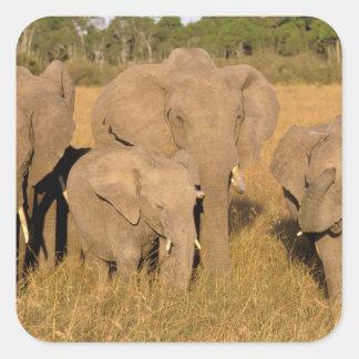 Africa, Kenya, Masai Mara. African Elephant Square Sticker