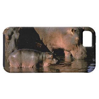 Africa, Kenya, Masai Mara. Common hippopotamuses Case For The iPhone 5