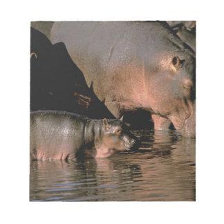 Africa, Kenya, Masai Mara. Common hippopotamuses Notepad