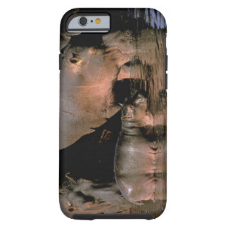 Africa, Kenya, Masai Mara. Common hippopotamuses Tough iPhone 6 Case