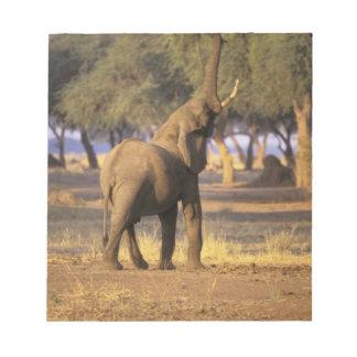 Africa, Kenya, Masai Mara. Elephant (Loxodonta Notepad